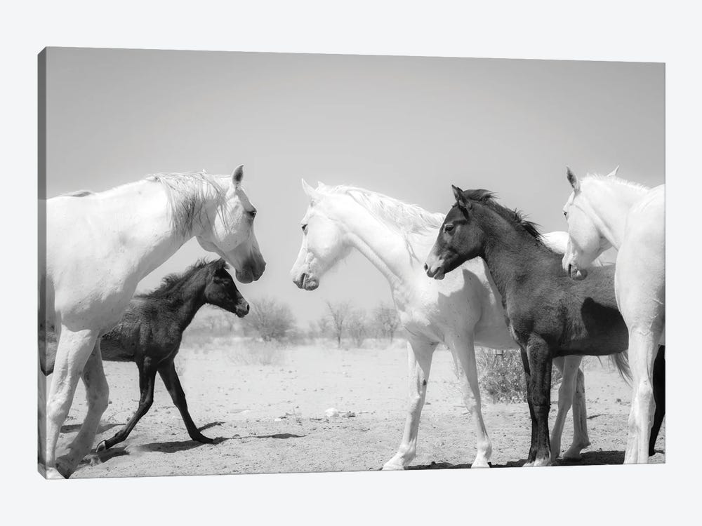Arab Horse Family by Andrew Lever 1-piece Canvas Wall Art