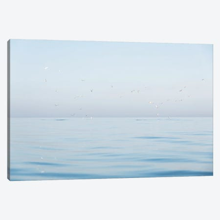 Seagulls At Sea Canvas Print #AWL121} by Andrew Lever Canvas Print