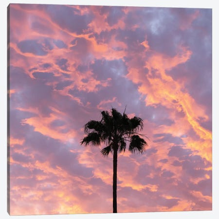 Paradise Palm Canvas Print #AWL124} by Andrew Lever Canvas Art