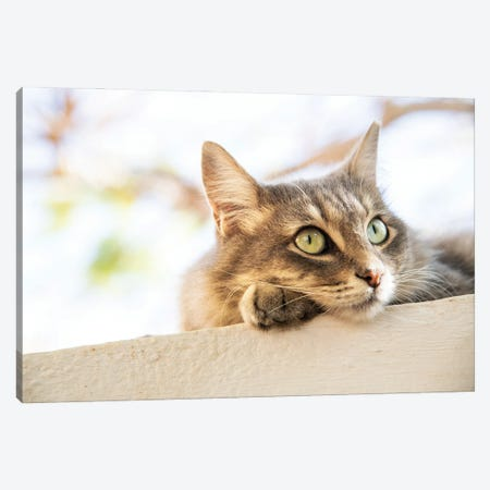 Green Eyed Tabby Canvas Print #AWL126} by Andrew Lever Canvas Artwork