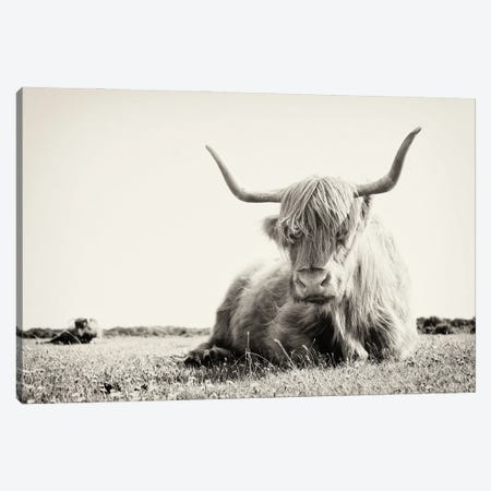 Long Horn Cow Canvas Print #AWL13} by Andrew Lever Canvas Wall Art