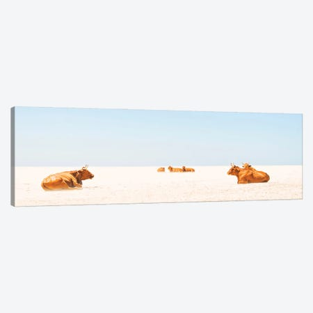 Sunbathing Cows Canvas Print #AWL29} by Andrew Lever Canvas Print