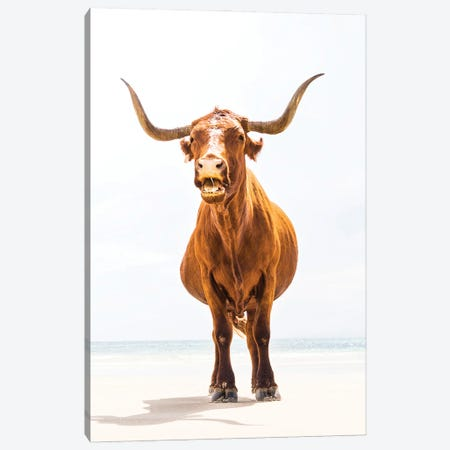 Beach Bull Canvas Print #AWL30} by Andrew Lever Canvas Artwork