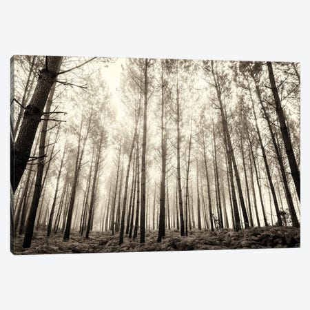 Forest In The Mist Canvas Print #AWL37} by Andrew Lever Art Print
