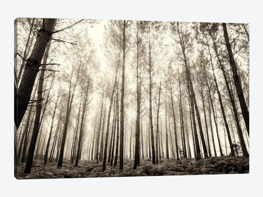 Forest In The Mist by Andrew Lever 1-piece Canvas Art