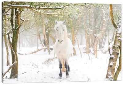 Snow Horse II Canvas Art Print