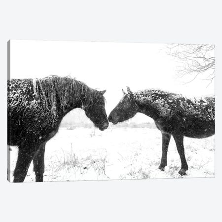 Snow Horses Canvas Print #AWL40} by Andrew Lever Canvas Art Print