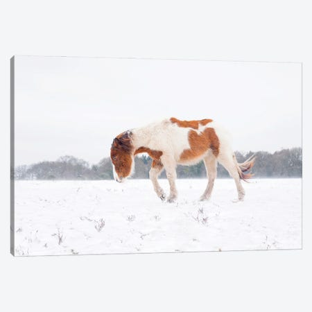 Journey In The Snow Canvas Print #AWL42} by Andrew Lever Art Print
