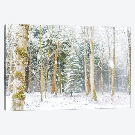 Christmas Tree Canvas Print #AWL44} by Andrew Lever Canvas Artwork