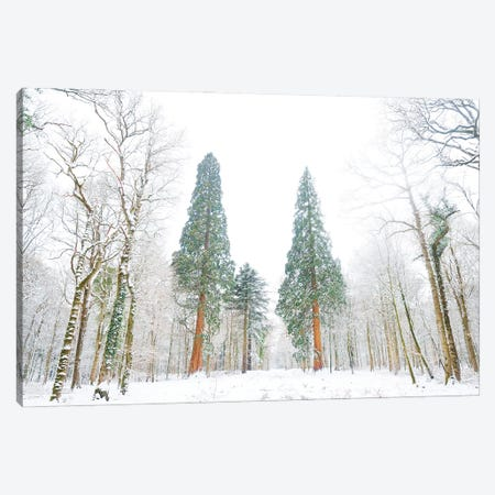 Forest Of Snow Canvas Print #AWL45} by Andrew Lever Canvas Art