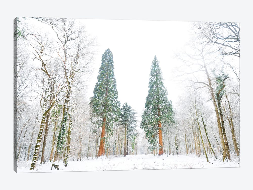 Forest Of Snow by Andrew Lever 1-piece Canvas Print