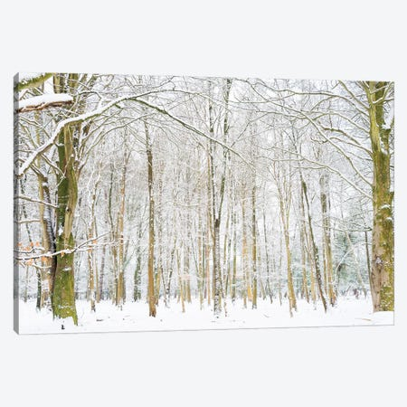 Winter Forest Canvas Print #AWL46} by Andrew Lever Canvas Art