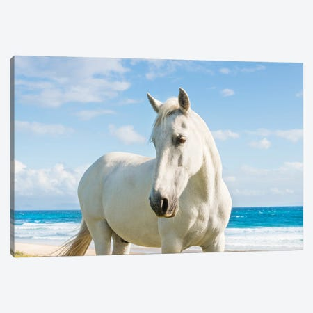 Beach Horse Canvas Print #AWL48} by Andrew Lever Art Print