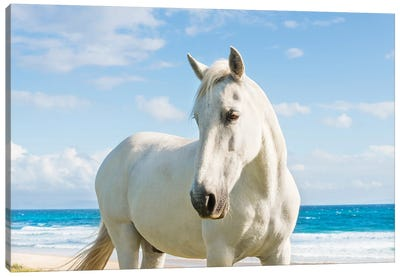 Beach Horse Canvas Art Print