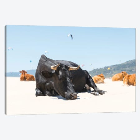 The Sleeping Bull Canvas Print #AWL49} by Andrew Lever Canvas Print