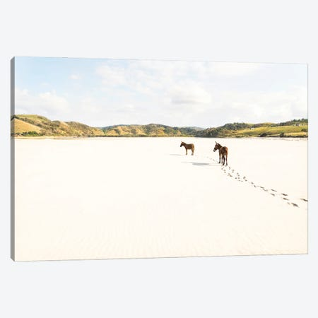 Beach Donkeys Canvas Print #AWL4} by Andrew Lever Canvas Art