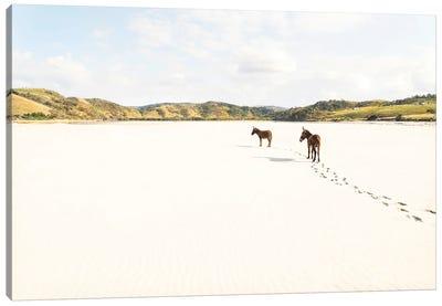 Beach Donkeys Canvas Art Print