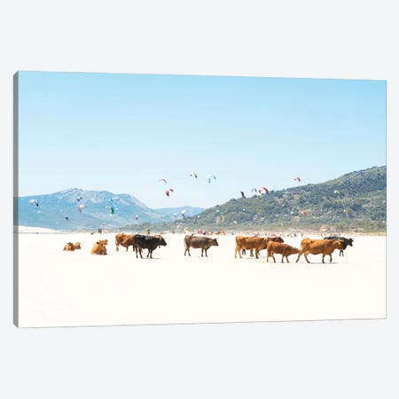 Beach Cows Canvas Print #AWL51} by Andrew Lever Canvas Art