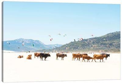 Beach Cows Canvas Art Print