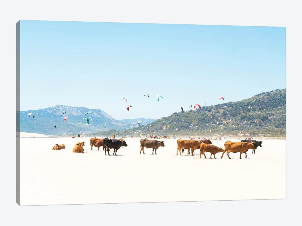 Beach Cows by Andrew Lever 1-piece Canvas Wall Art
