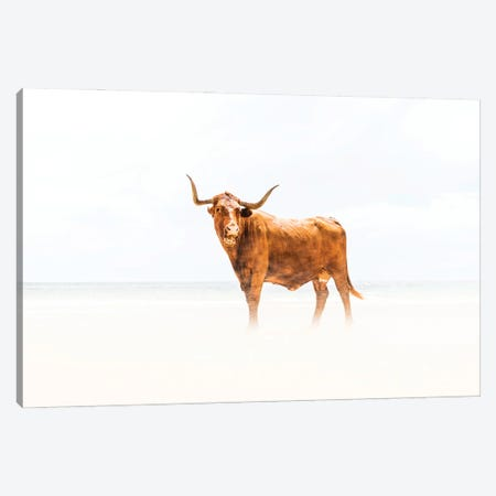 Beach Cow Canvas Print #AWL53} by Andrew Lever Canvas Artwork