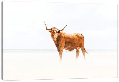Beach Cow Canvas Art Print