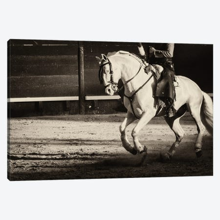 White Charger Canvas Print #AWL60} by Andrew Lever Canvas Art Print