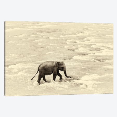 Baby Steps Canvas Print #AWL68} by Andrew Lever Canvas Print