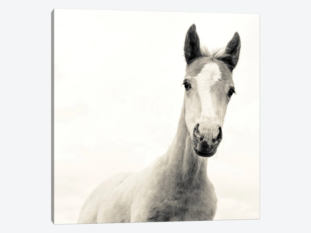The Young One by Andrew Lever 1-piece Canvas Wall Art
