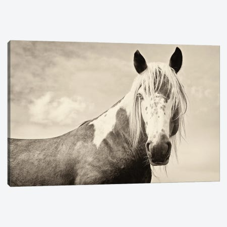 Painted Horse Canvas Print #AWL78} by Andrew Lever Canvas Art