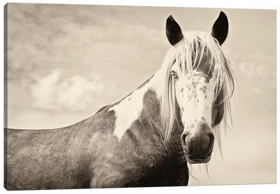 Painted Horse Canvas Art Print