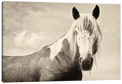 Painted Horse Canvas Art Print