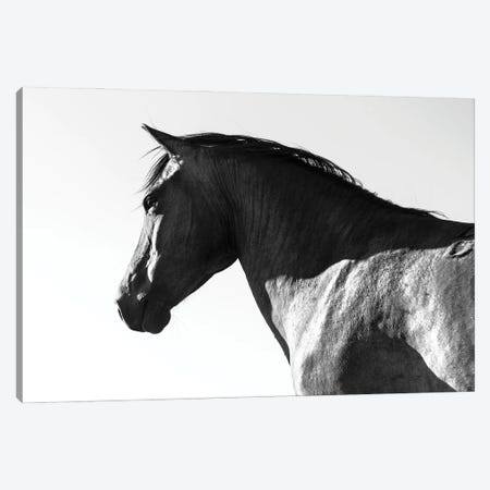 Black Beauty Canvas Print #AWL81} by Andrew Lever Canvas Art Print