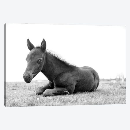 Young Black Beauty Canvas Print #AWL88} by Andrew Lever Canvas Print