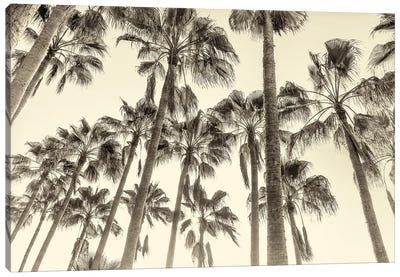 Canary Palms Canvas Art Print
