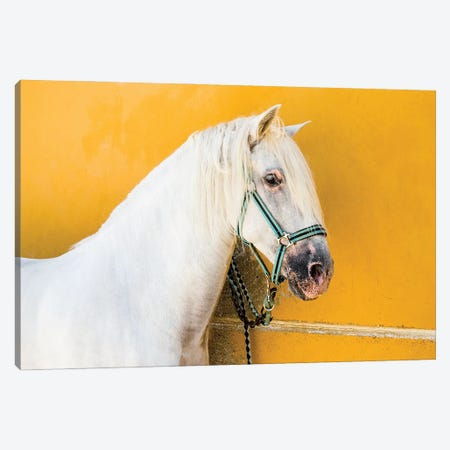 White Stallion Canvas Print #AWL90} by Andrew Lever Canvas Wall Art