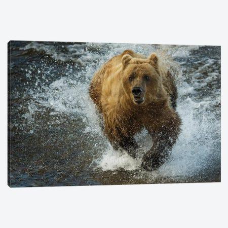 Brown bear fishing, Katmai National Park, Alaska, USA Canvas Print #AWO14} by Art Wolfe Canvas Art