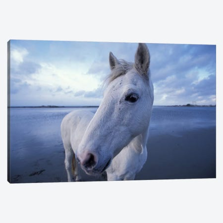 Camargue Horse, Camargue, Provence-Alpes-Cote d'Azur, France Canvas Print #AWO1} by Art Wolfe Canvas Art