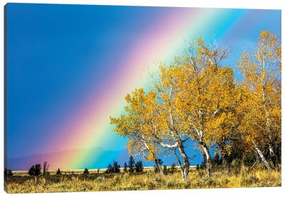 Rainbow over Aspens, Grand Teton National Park, Wyoming Canvas Art Print