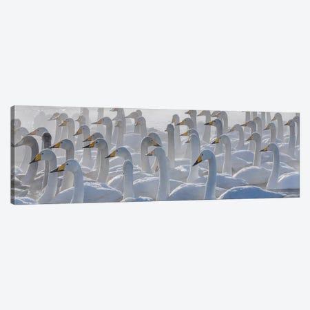 Whooper swans, Hokkaido, Japan Canvas Print #AWO29} by Art Wolfe Canvas Art