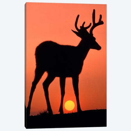 Deer Silhouette At Sunset, Olympic National Park, Washington, USA Canvas Print #AWO2} by Art Wolfe Canvas Art