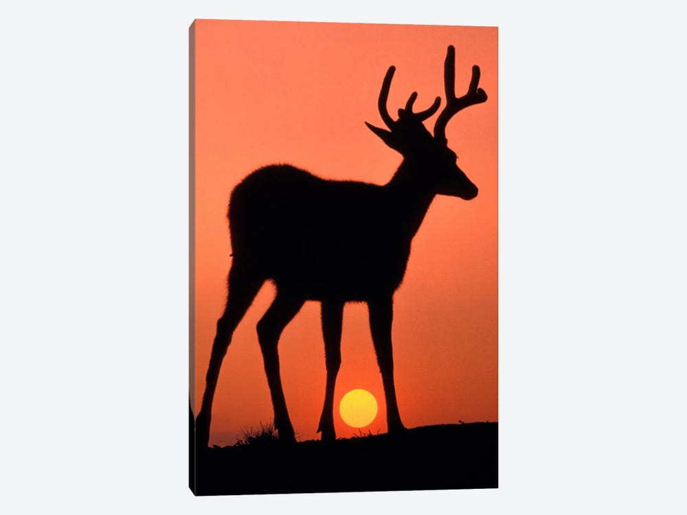 Deer Silhouette At Sunset, Olympic National Park, Washington, USA by Art Wolfe 1-piece Canvas Art