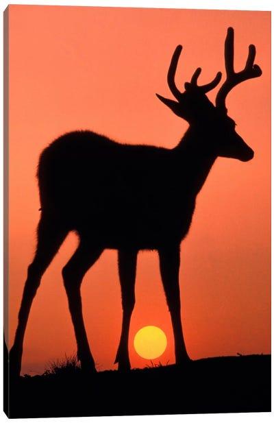 Deer Silhouette At Sunset, Olympic National Park, Washington, USA Canvas Art Print
