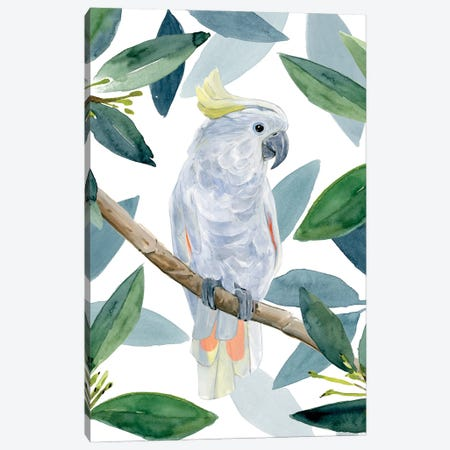Cockatoo Perch I Canvas Print #AWR101} by Annie Warren Canvas Art Print