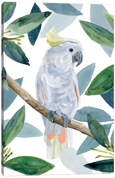 Cockatoo Perch I Canvas Art Print