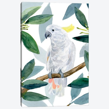 Cockatoo Perch II Canvas Print #AWR102} by Annie Warren Art Print