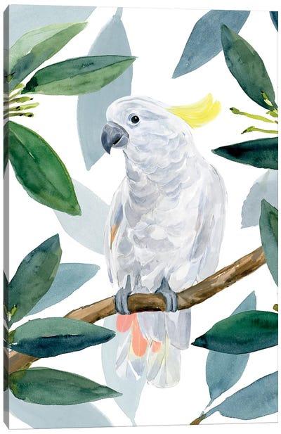 Cockatoo Perch II Canvas Art Print