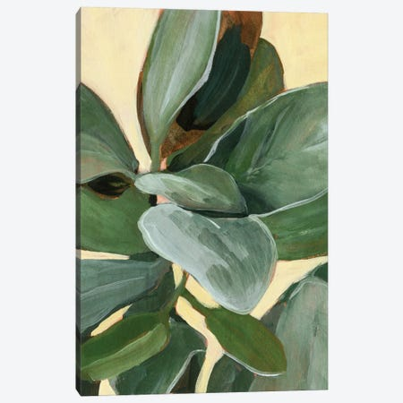 Plant Study I Canvas Print #AWR107} by Annie Warren Canvas Artwork