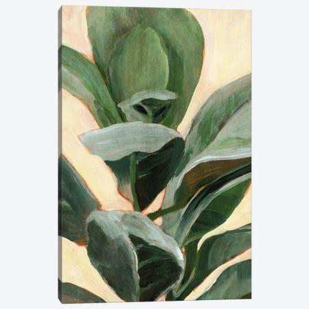 Plant Study II Canvas Print #AWR108} by Annie Warren Canvas Art Print