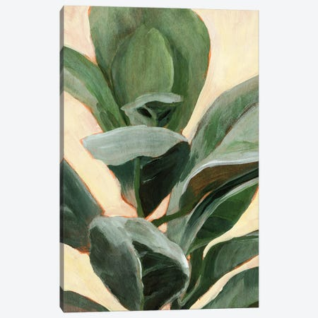 Plant Study II Canvas Print #AWR108} by Annie Warren Canvas Art Print